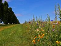 Basenfasten-Wander-Woche (09.- 16.05.2021), Mecklenburg, D